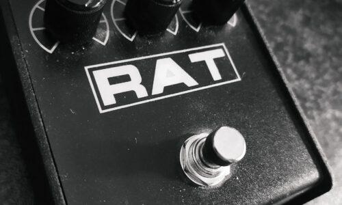 proco rat caride
